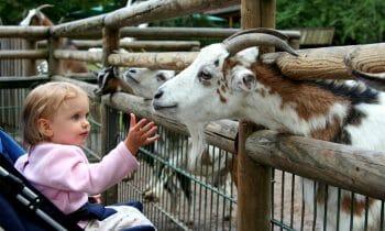 Visit Djurgården to find some of Stockholm's best children activities