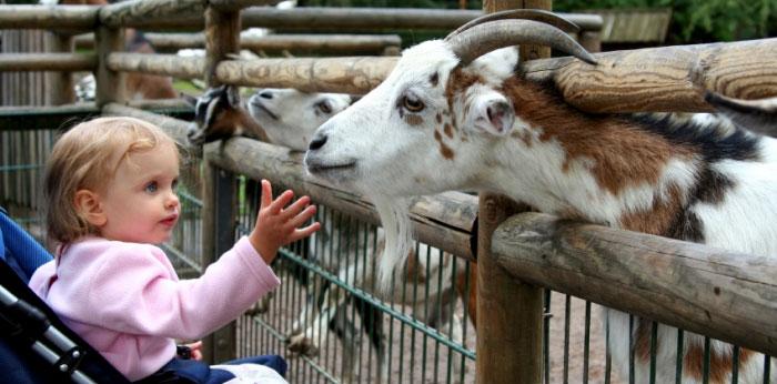 Besök Djurgården för att hitta några av Stockholms bästa barnaktiviteter