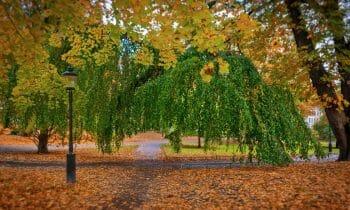 Stockholm's best parks