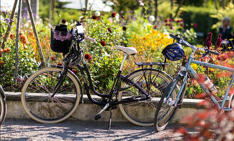 Biking in Djurgården, Stockholm